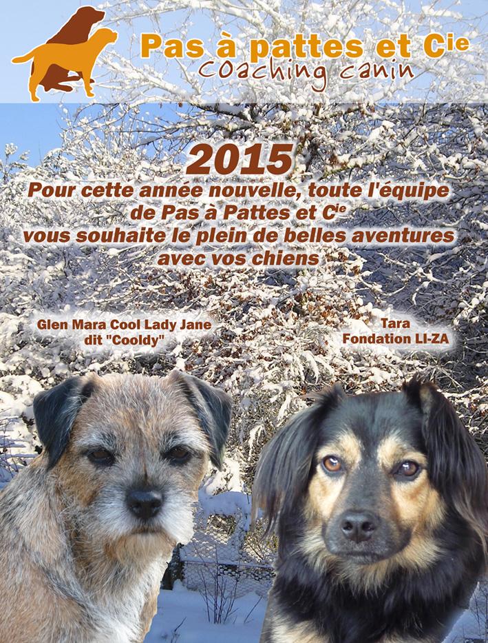 Voeux 2015 pour blog